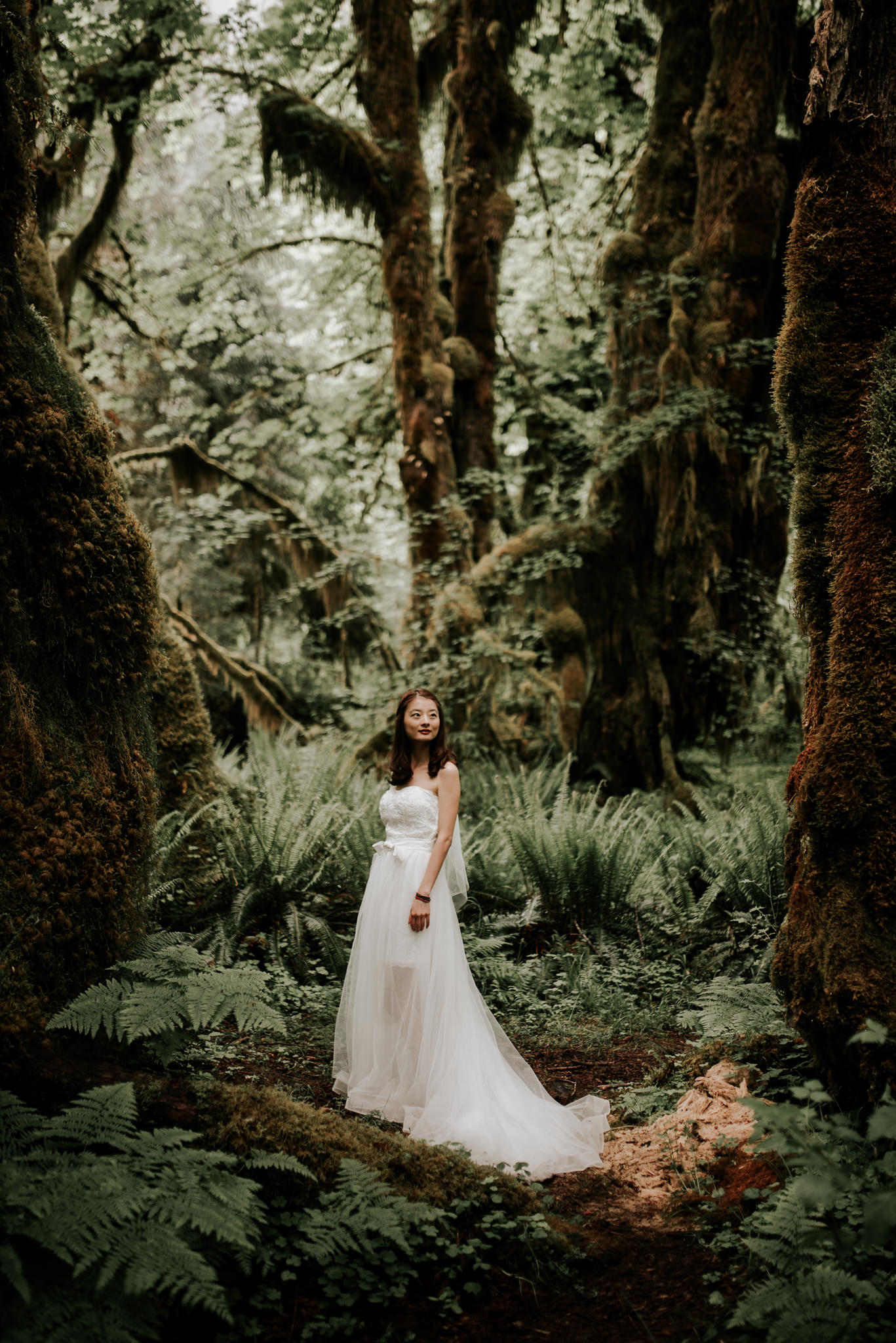 hoh rainforest bridals in olympic national park kristen
